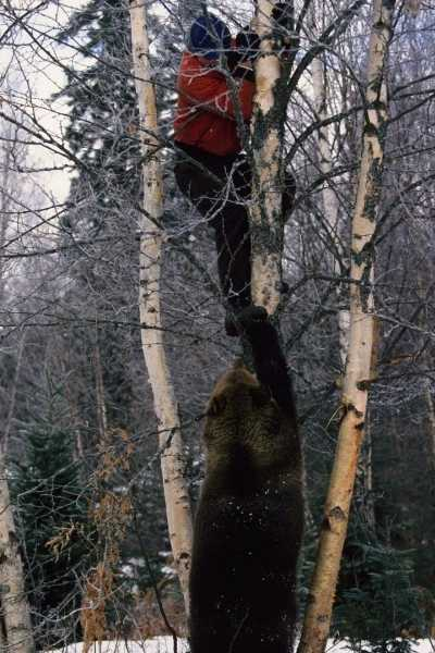 a bear attacks a person while camping